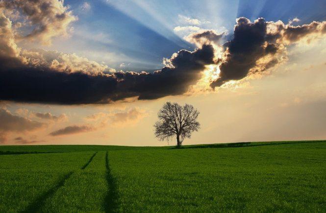 campagna albero