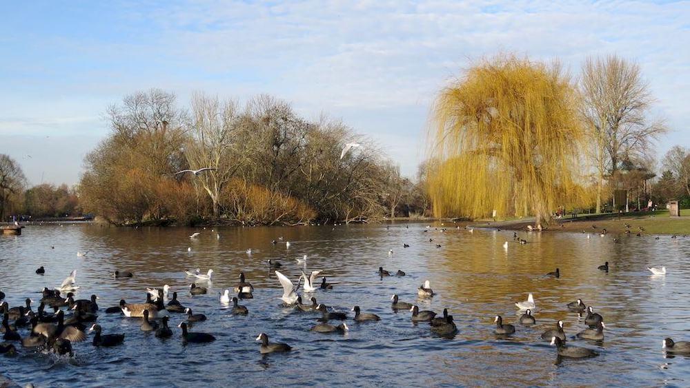 Regent's park inverno