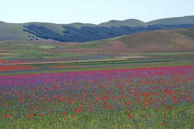 fioritura castelluccio di norcia