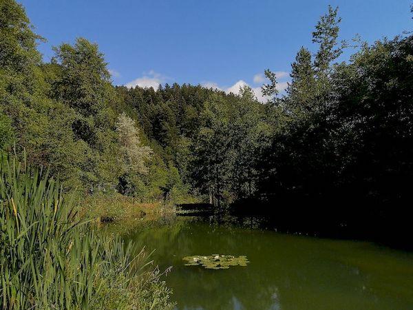 giardino botanico valbonella