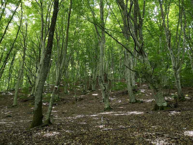 bosco di cerro bosco di tecchie